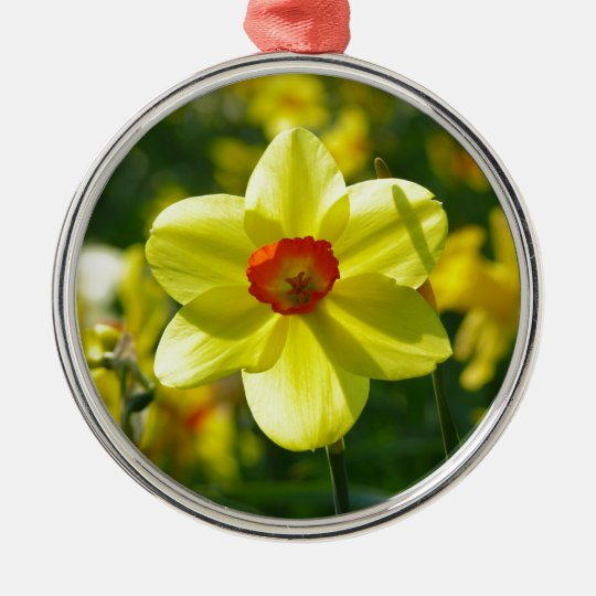 Yellow orange Daffodils 02.1g Silver-Colored Round Ornament