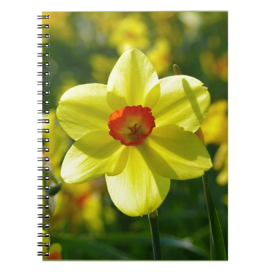 Yellow orange Daffodils 02.1g Spiral Notebook
