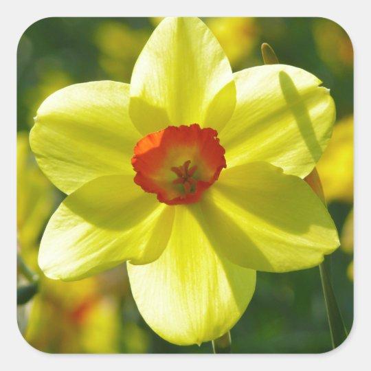 Yellow orange Daffodils 02.1g Square Sticker