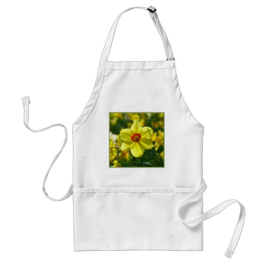 Yellow orange Daffodils 02.1g Standard Apron