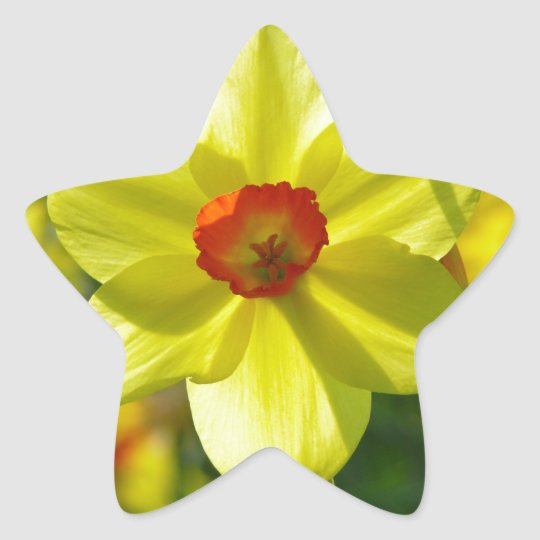Yellow orange Daffodils 02.1g Star Sticker