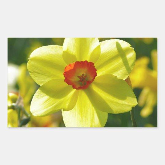Yellow orange Daffodils 02.1g Sticker