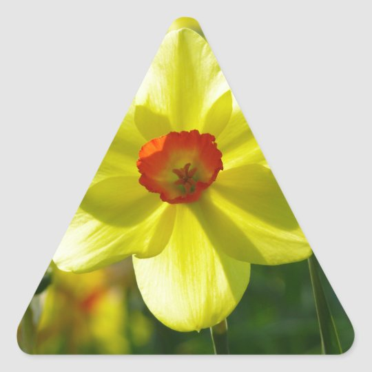 Yellow orange Daffodils 02.1g Triangle Sticker