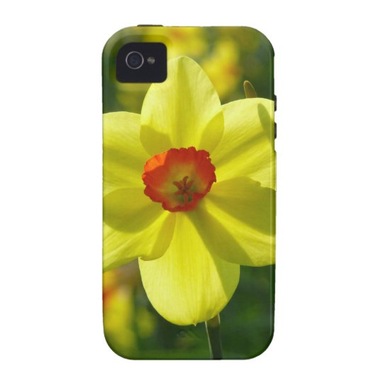 Yellow orange Daffodils 02.1g Vibe iPhone 4 Cases