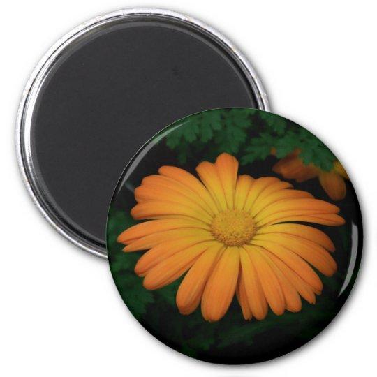 Yellow orange daisy flower 2 inch round magnet