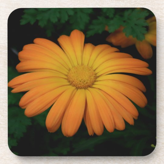 Yellow orange daisy flower beverage coasters