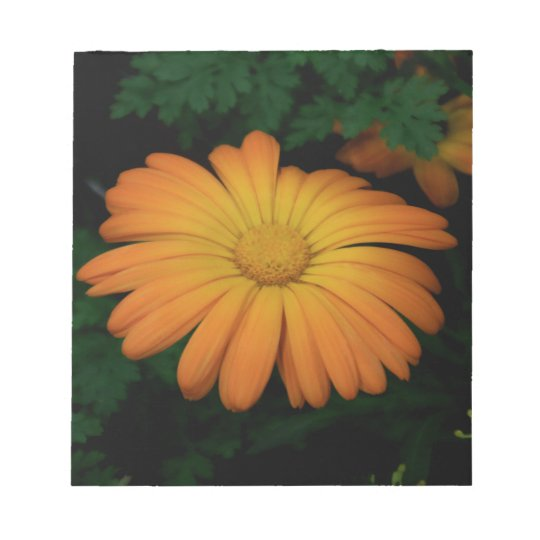 Yellow orange daisy flower notepad