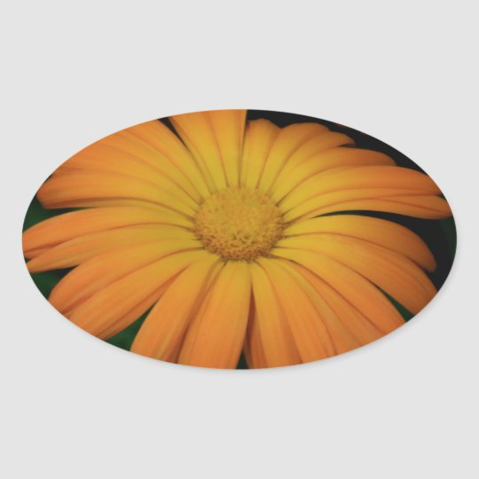 Yellow orange daisy flower oval sticker