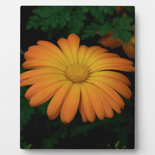 Yellow orange daisy flower plaque