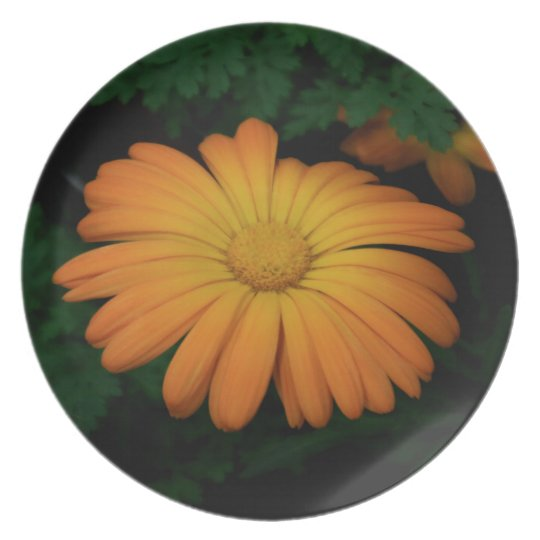Yellow orange daisy flower plate