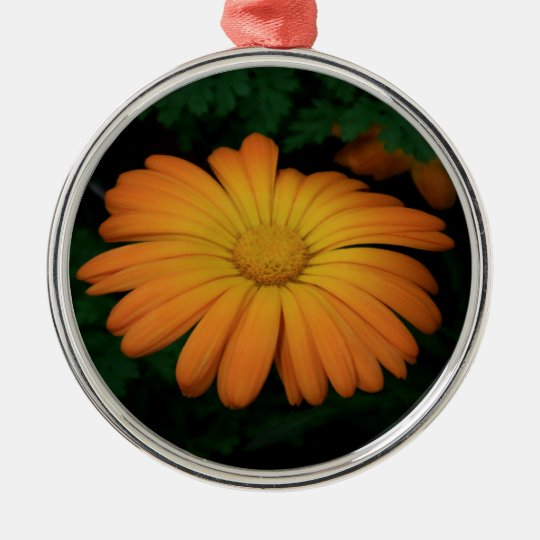 Yellow orange daisy flower Silver-Colored round ornament