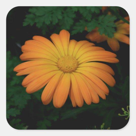 Yellow orange daisy flower square sticker