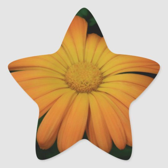 Yellow orange daisy flower star sticker