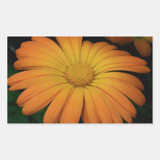 Yellow orange daisy flower sticker
