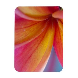 Yellow Orange Deep Pink Tropical Plumeria Flower Magnet