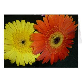 Yellow & Orange Gerber daisy Card