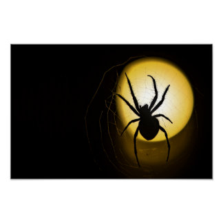 Yellow Orb Spider | Fine Art Poster By AvidWolf