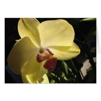 Yellow Orchid Blank Inside Greeting Card