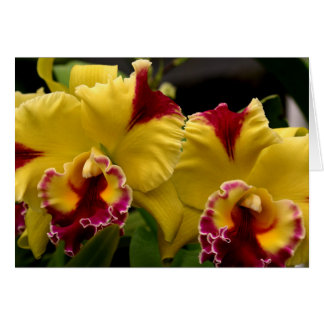 Yellow Orchids Card