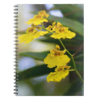 Yellow Orchids Notebook