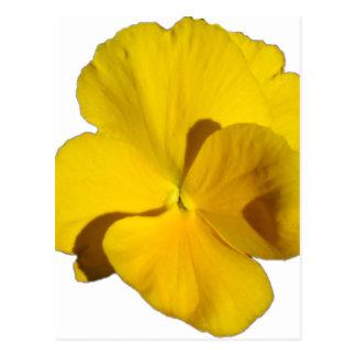 Yellow Pansy 201711f Postcard