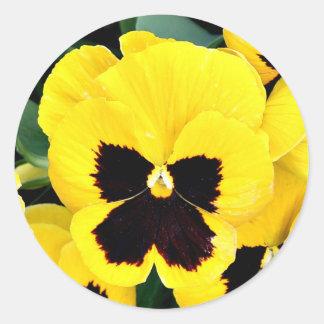 Yellow Pansy Classic Round Sticker