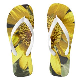 Yellow petals of a large sunflower flip flops