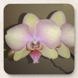 Yellow Pink Gradient Dendrobium Orchid Coaster