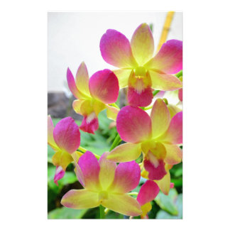 Yellow Pink Orchids Customized Stationery