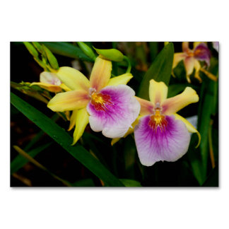 Yellow Pink Purple Miltonia Sunset Orchids Table Card