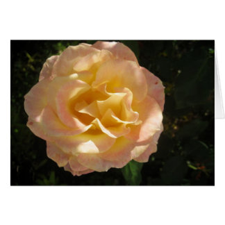 Yellow pink rose Greeting Card