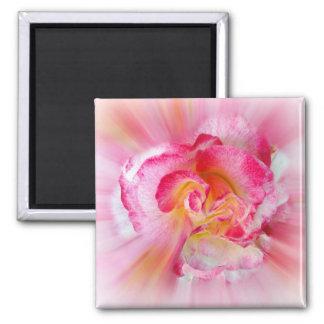 yellow pink Rose Magnet