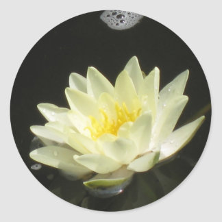 Yellow Pond Lily Sticker