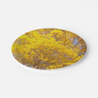 Yellow Poui, TT Paper Plate