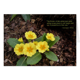 Yellow primroses: Spring is on the way! Card