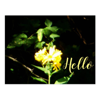Yellow Radiant Brightness Flower Postcard