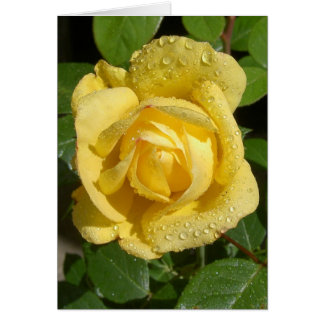 Yellow Rain Rose Card