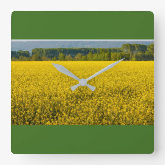 yellow rapeseed flowers on square clock