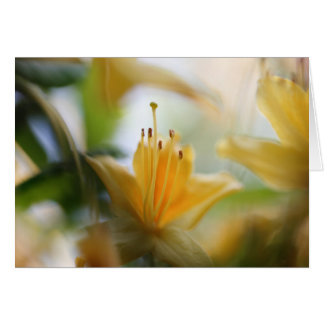 Yellow rhododendrons card