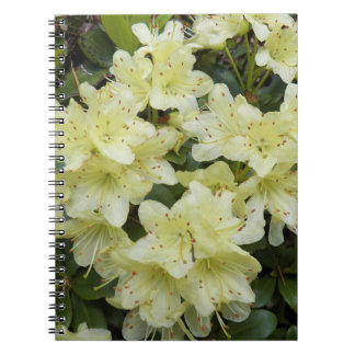Yellow Rhododendrons Floral Notebooks