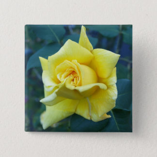 Yellow Rose 2 Inch Square Button