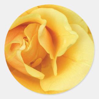 Yellow Rose Blossom Sticker
