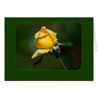 Yellow Rose Bud Card