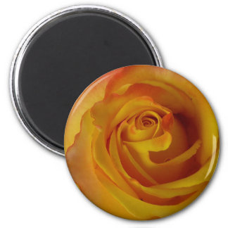 yellow rose bud magnet