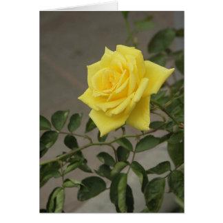 Yellow Rose Card