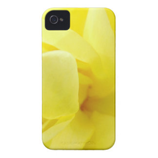Yellow Rose Case-Mate iPhone 4 Cases