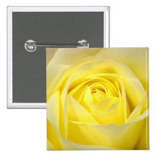Yellow Rose Closeup 2 Inch Square Button