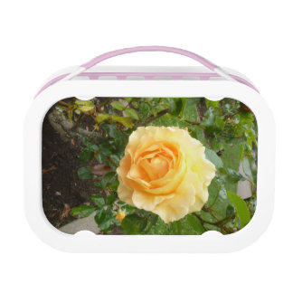 Yellow Rose Lunch Box