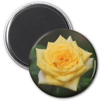 Yellow Rose Magnet
