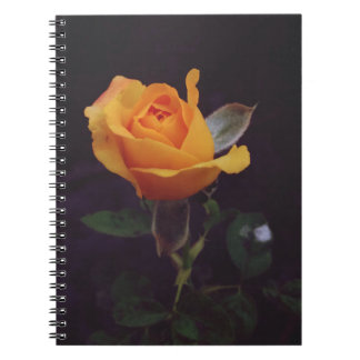 yellow rose notebook